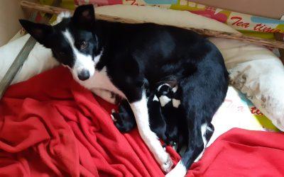 Puppy's bij de schaapskudde!